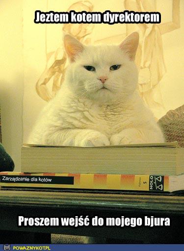 Kot dyrektor