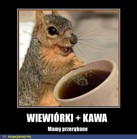 Wiewiórki i kawa
