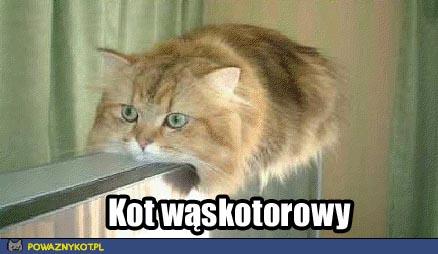 kot wąskotorowy