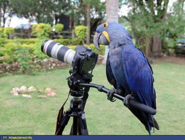papuga-rezyser
