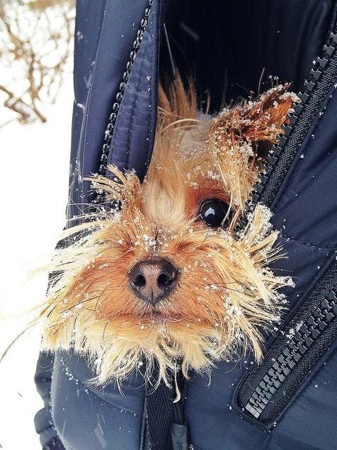 szczeniak nie jest zadowolony z zimy